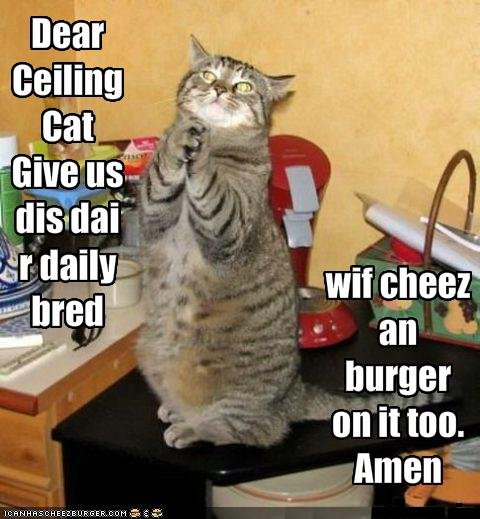 Funny Pics of Animals With Words Funny Pics of Animals With